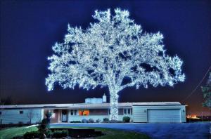40.000 светодиодов и 1 дерево