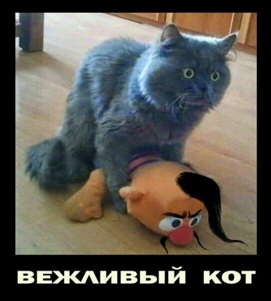 http://humor.gunm.ru/wp-content/uploads/2015/11/6942c82172f3.jpg